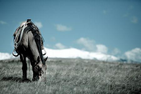 1waitin_for_a_cowboy