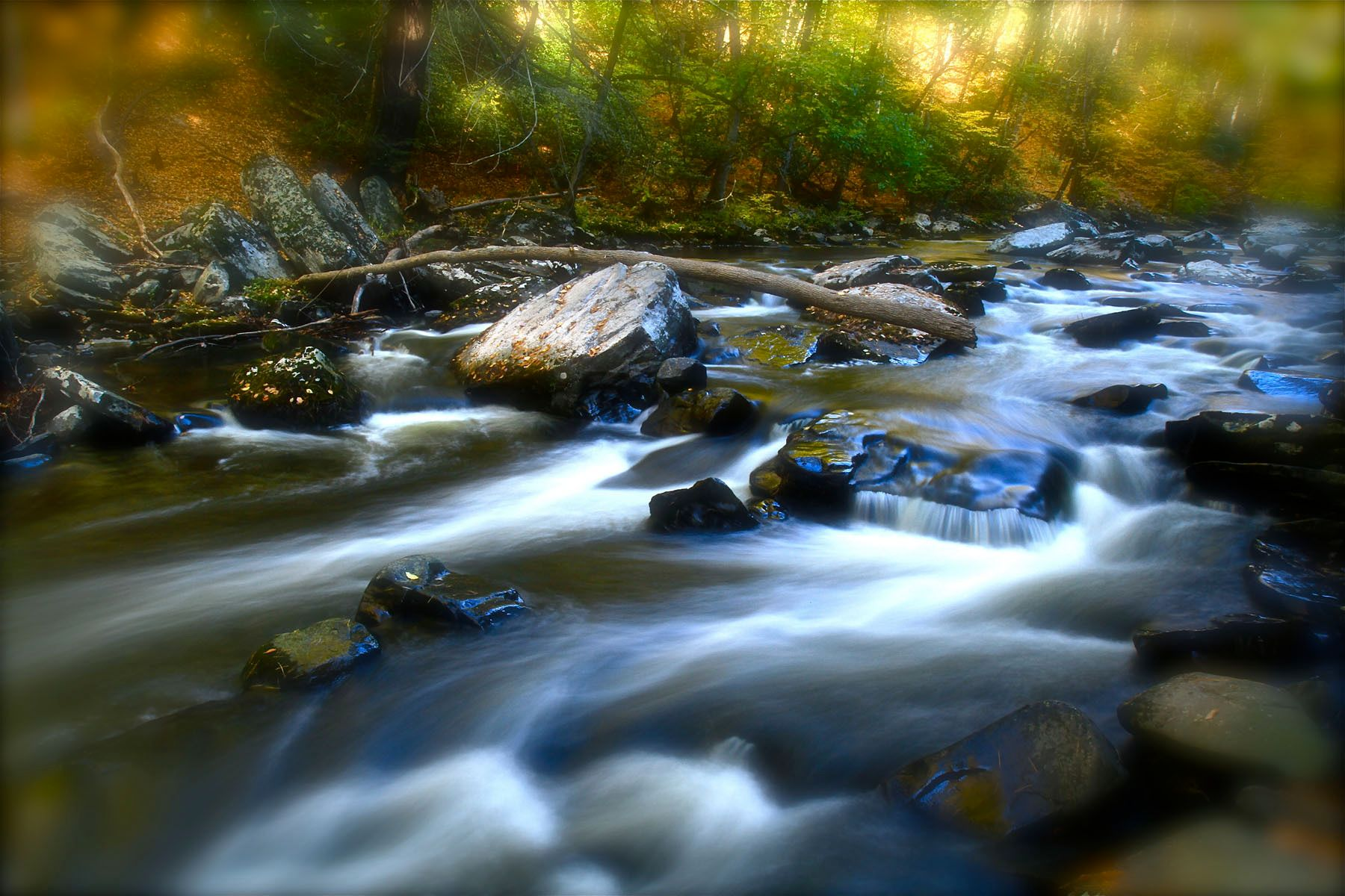 1img_3008_land_and_water_12w_