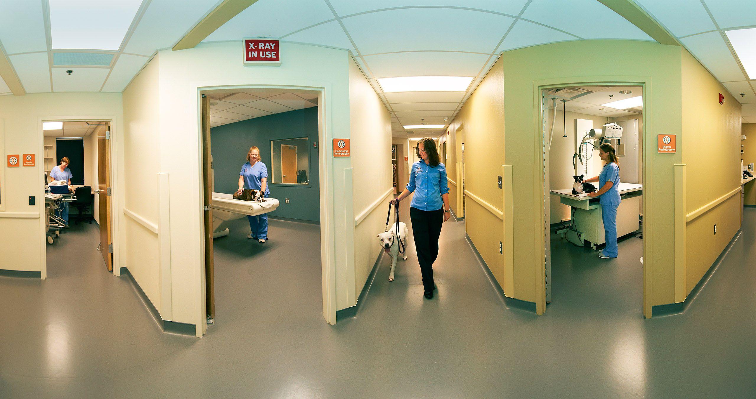 MRI Vet Clinic