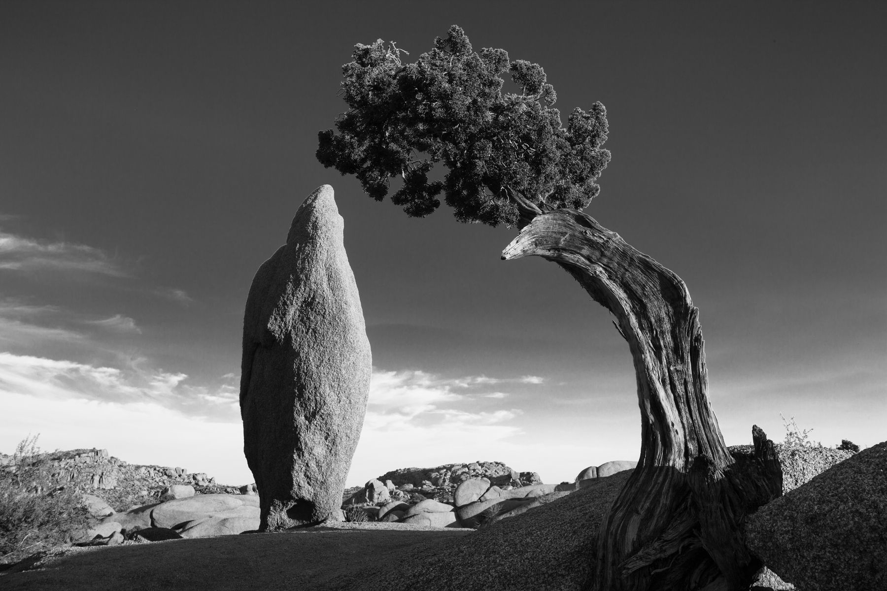 1joshuatree_img_9226_dash_24x36