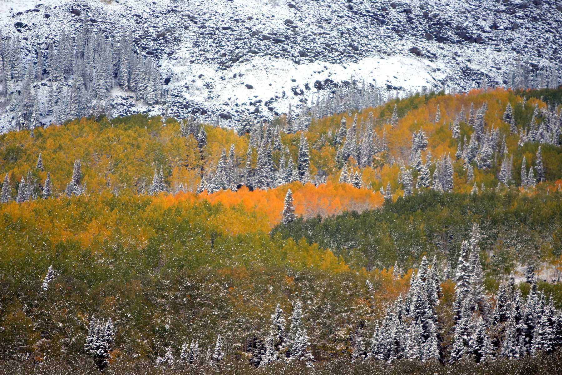 1midway_fall_dash_24x36