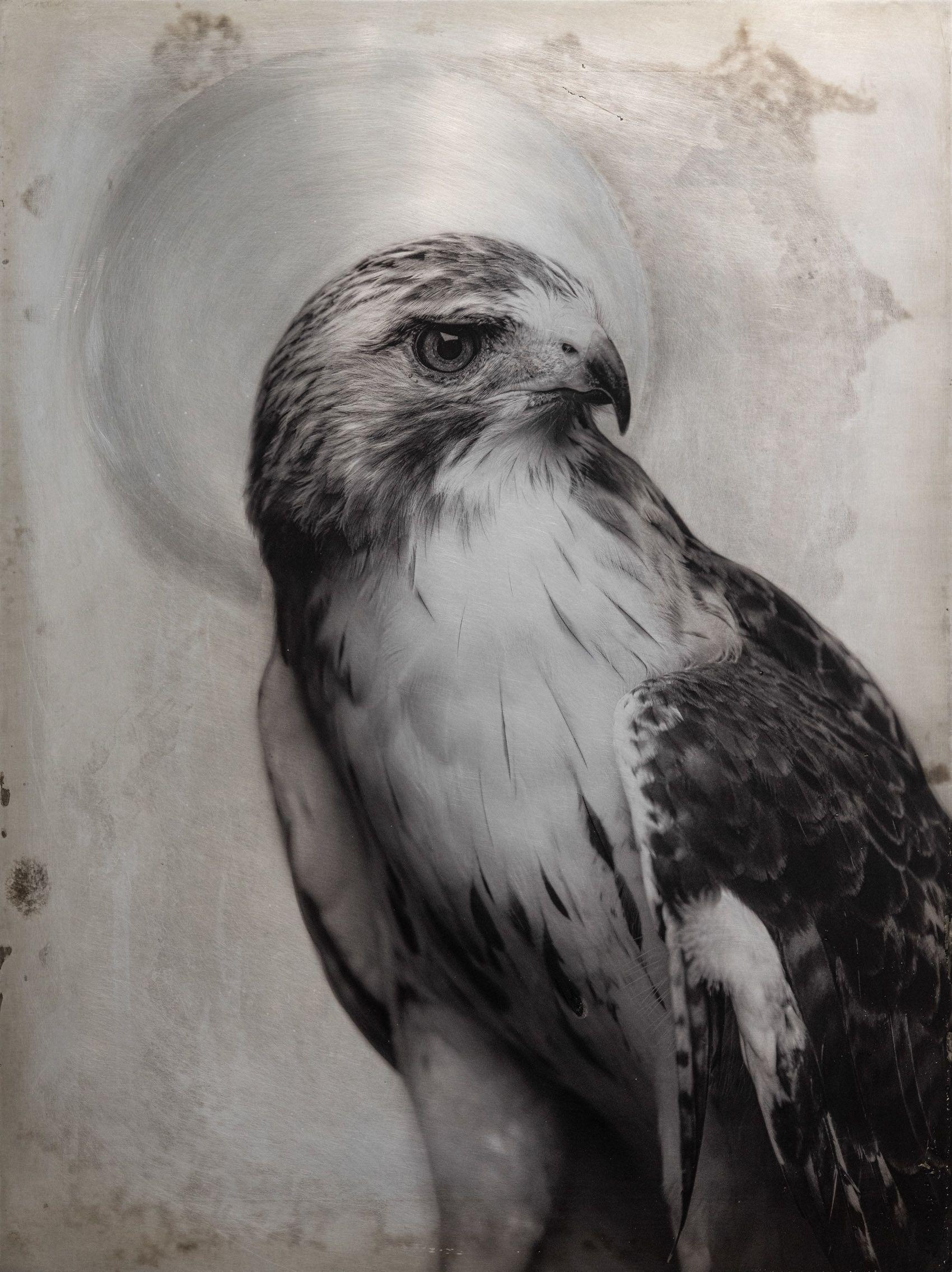 Red Hawk.jpg