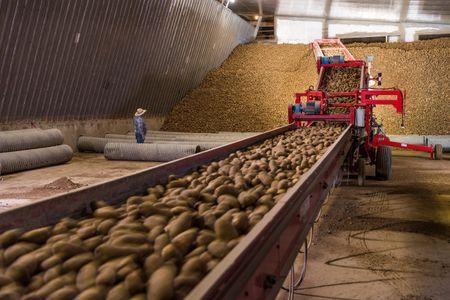 Grant County Public Utility District Potato Farm