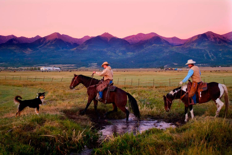 Dawn cattle roundup