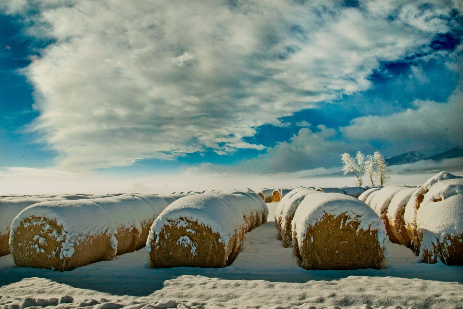 Early snow covers hay bales in Colorado