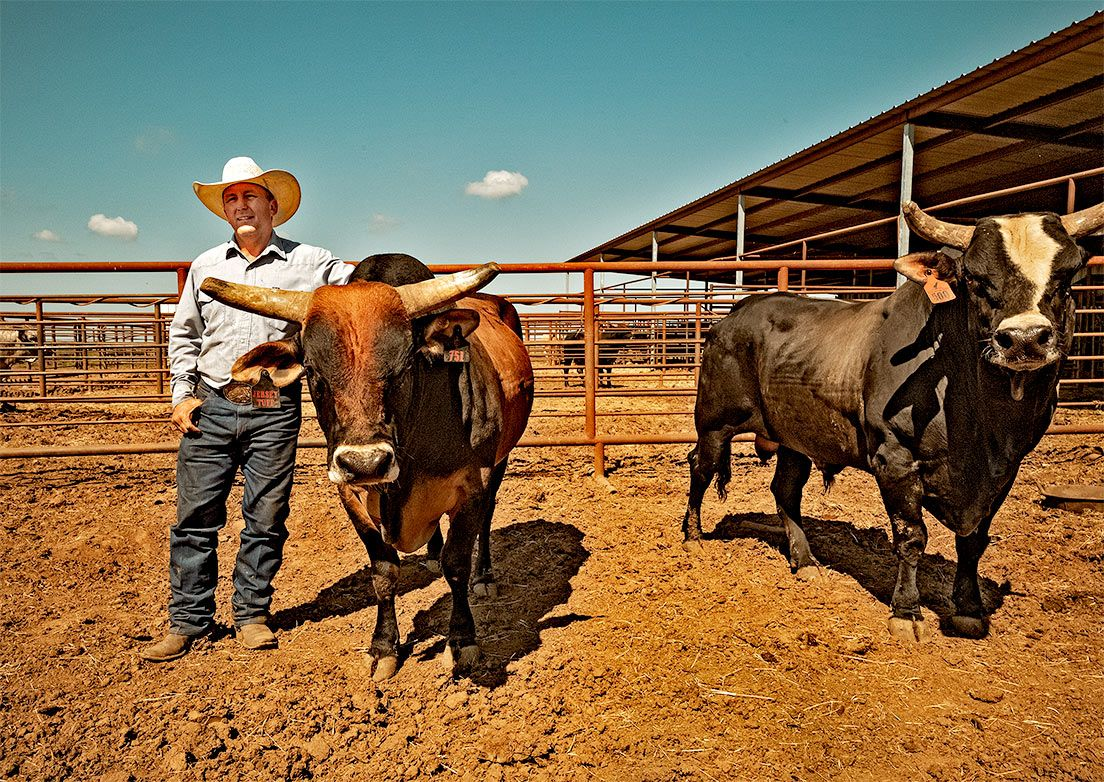 JW Hart with 2 of his celebrated bulls