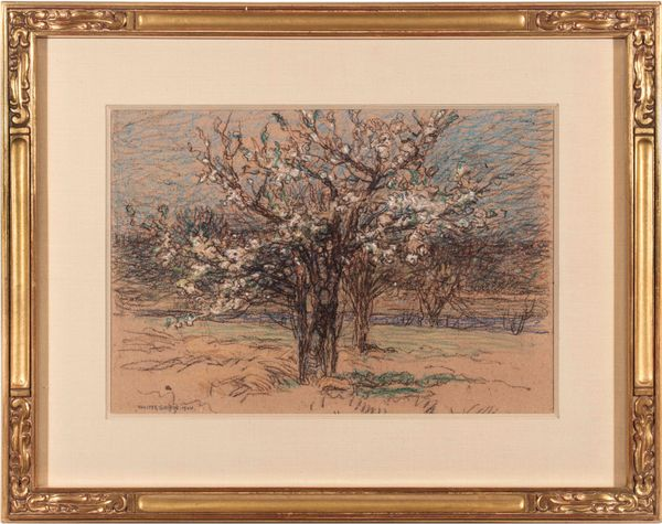 Walter Griffin Orchard in Blossom Framed