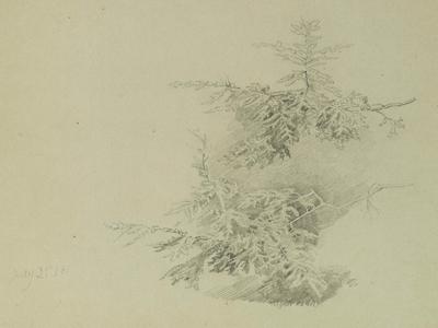 William Trost Richards Fir Trees Unframed