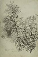 William Trost Richards Blossoming Plant Unframed