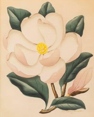 Shirrell W. Graves Magnolia unframed