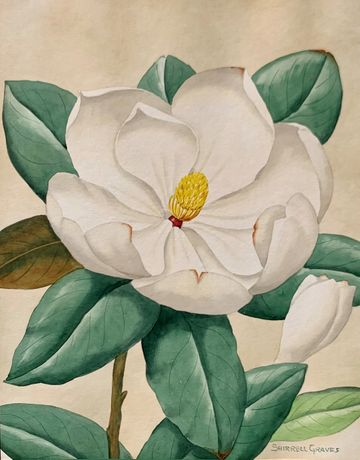 Shirrell W. Graves Magnolia