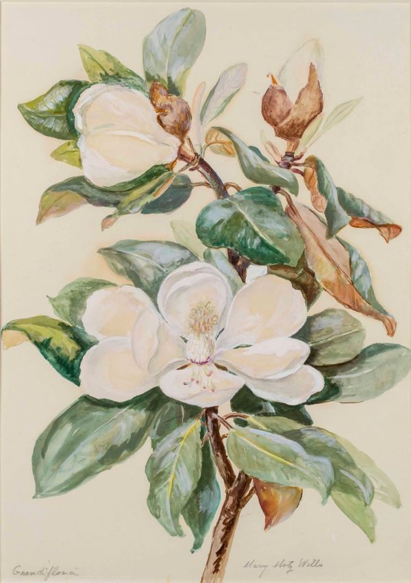 Mary Motz Wills Grandi Flora, Magnolia Flower unframed