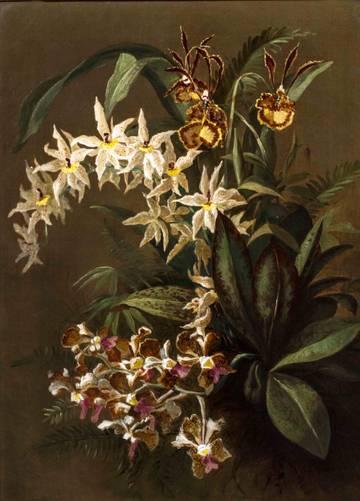 William Anderson Sherwood Still Life of Orchids unframed