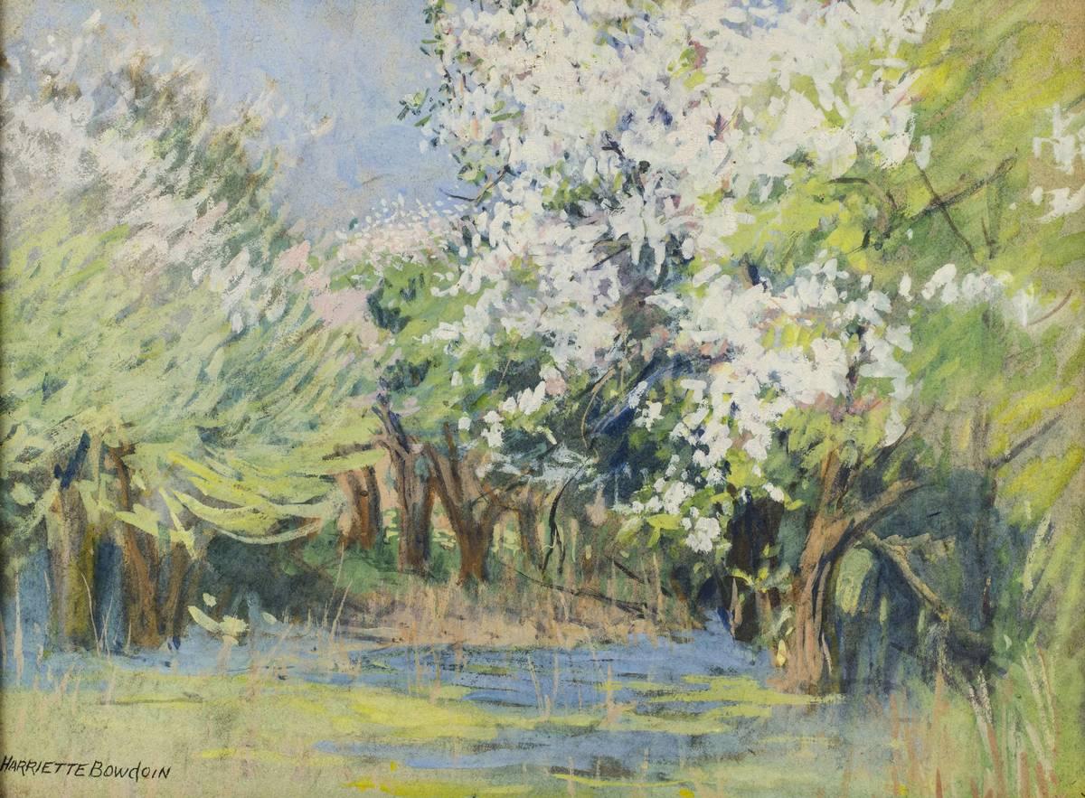 Harriet Bowdoin Spring Forest