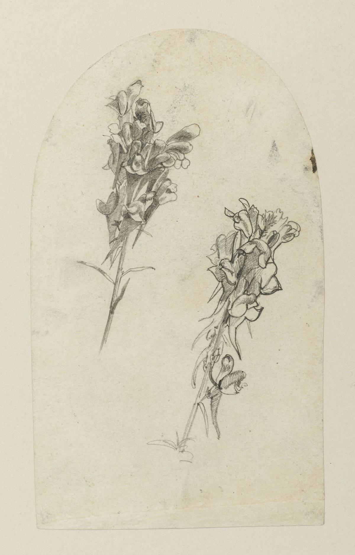 William Trost Richards Flower Sprigs Unframed