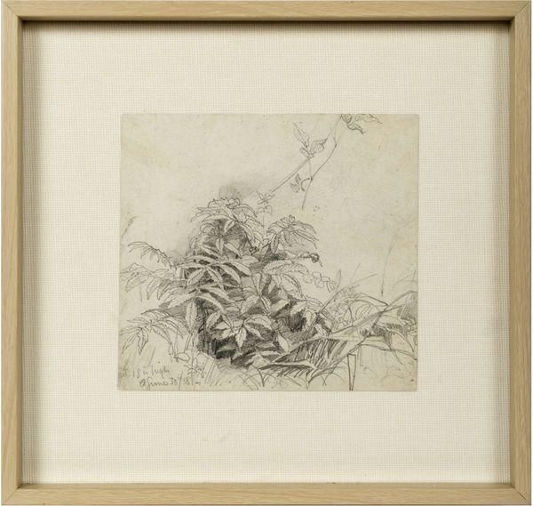 William Trost Richards Plant Framed