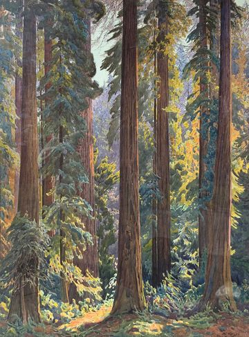 Gunnar Mauritz Widforss California Redwoods