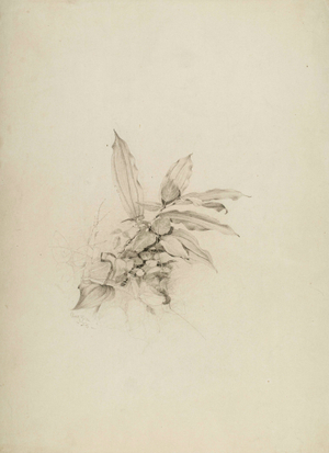 Frank Anderson Nature Study Unframed
