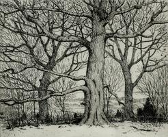 Voorhees_Winter Trees_Final.jpg