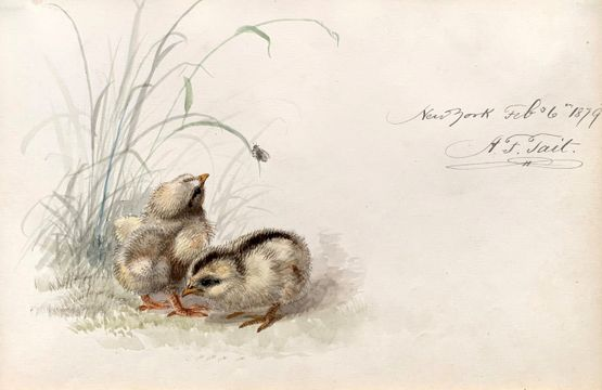 Arthur Fitzwilliam Tait Two Baby Chicks, February 6, 1879
