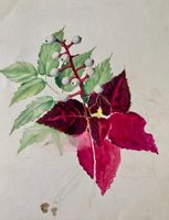 Mary Lane McMillan Coleus Sketch, c. 1951 unframed