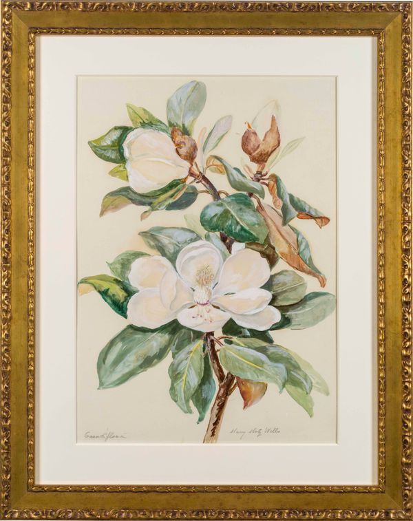 Mary Motz Wills Grandi Flora, Magnolia Flower framed