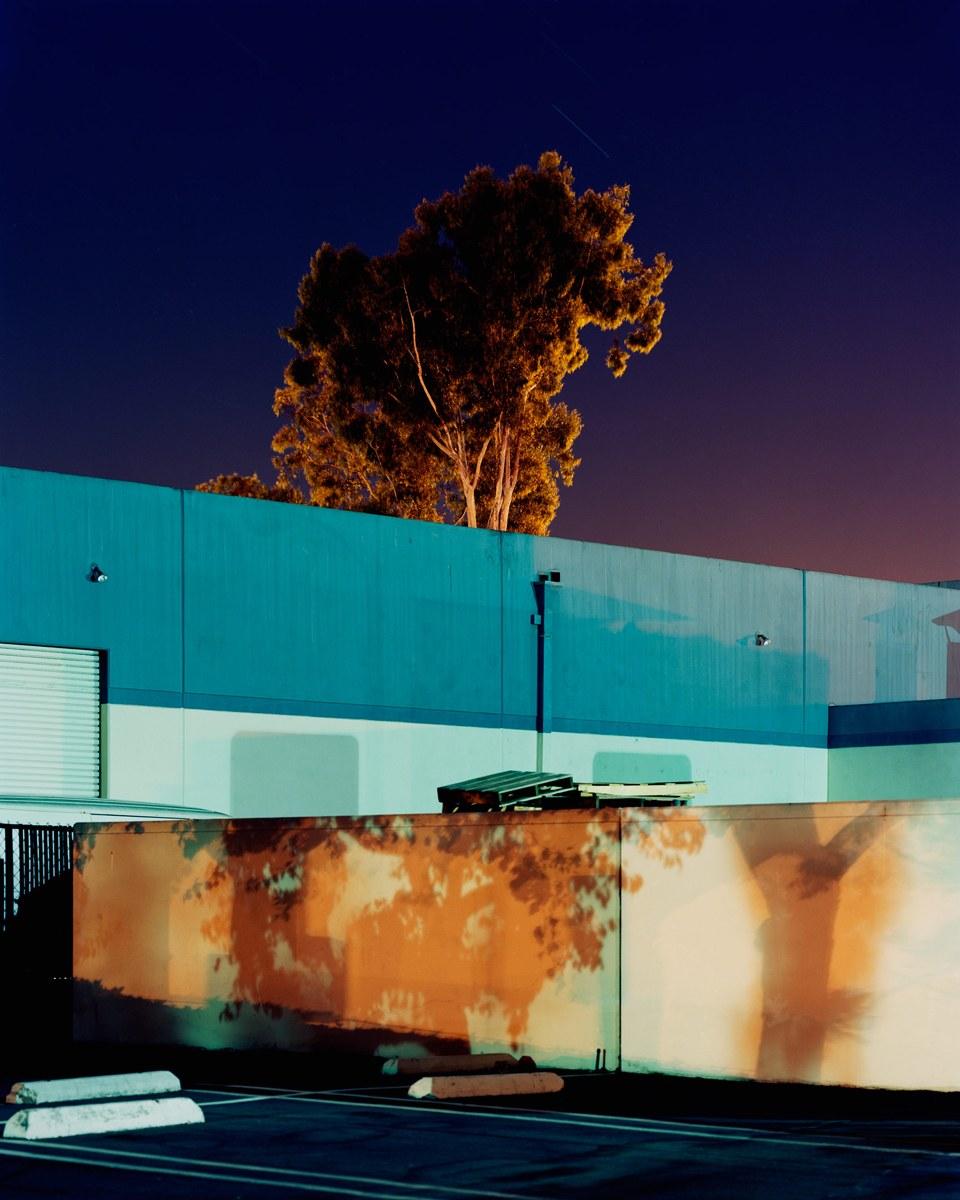 Ayuson_warehouse_tree_800kb.jpg