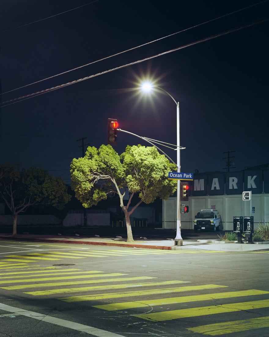 AYUSON_92163_32344_tree_OceanPark_800kb.jpg