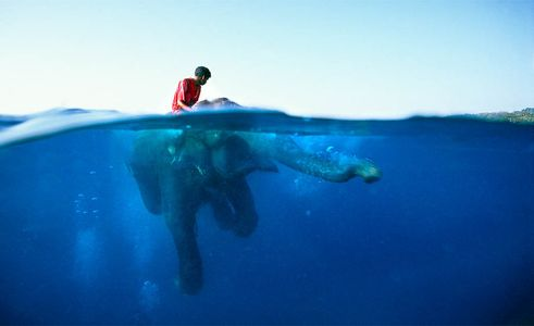 Swimming Elephant with trainer on his back, Havelock Island, Andamans, India, South East Asia Divers