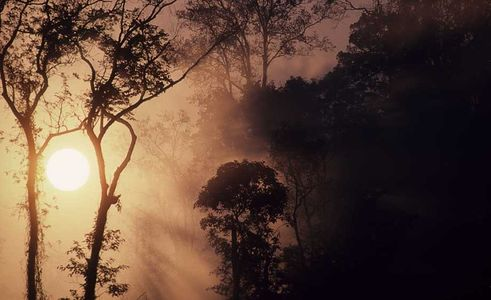 Trees and fog defuse the sun , Northern Thailand