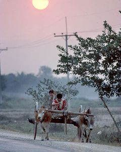 Sunset Northern Thailand, Boys on and ox cart heading to town