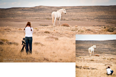 My most memorable and favorite moment in the wild ~My UnicornSalt Wells, Wyoming, 2011