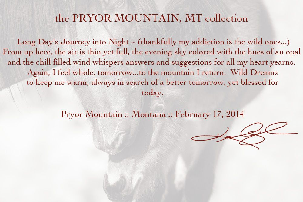 Pryor Mountains, Montana, February, 2014