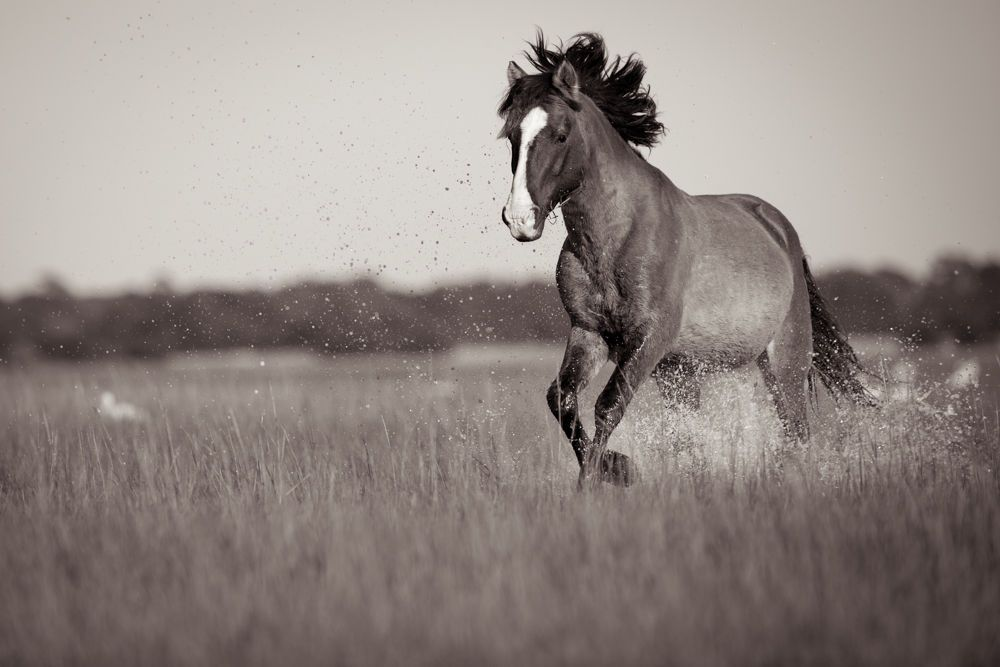 1wild_horses_outerbanks_1.jpg