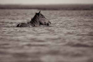 1wild_horses_outerbanks_4.jpg