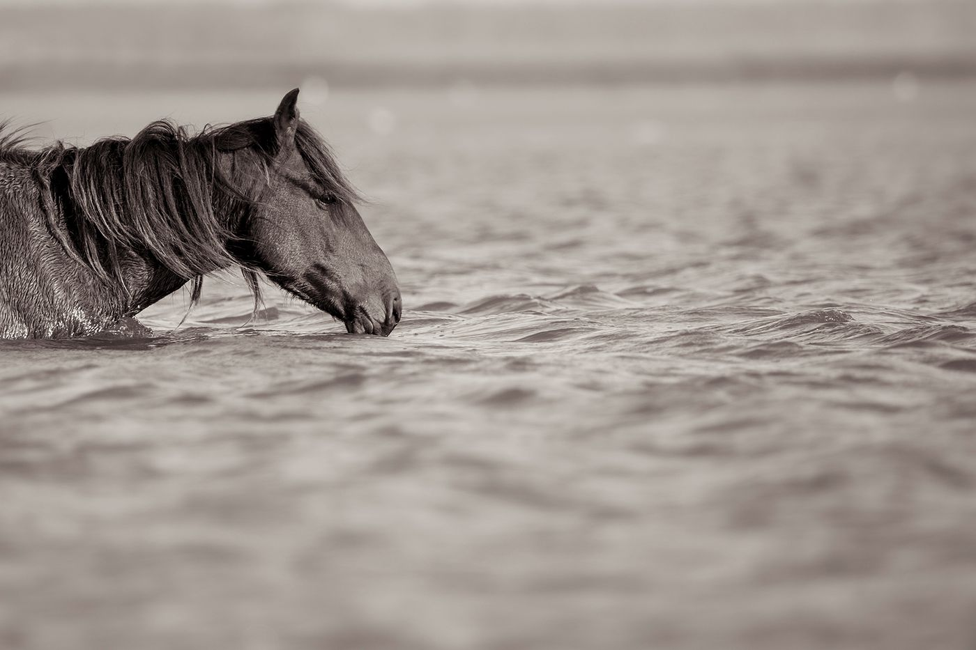 the Water Horse