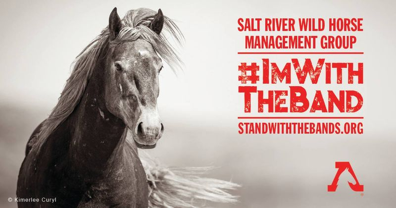 Salt River Wild Horse Mangagement