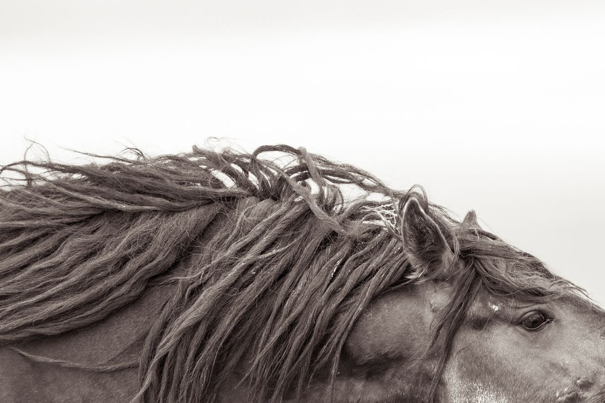 Home Wild Horse Black And White Photography Kimerlee Curyl Fine Art