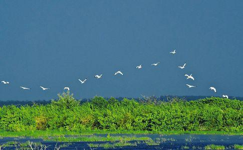 1white_birds_w.jpg