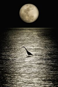 Moon Rise & Heron w.jpg