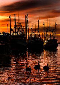 Shrimp Boats Pelicans W.jpg