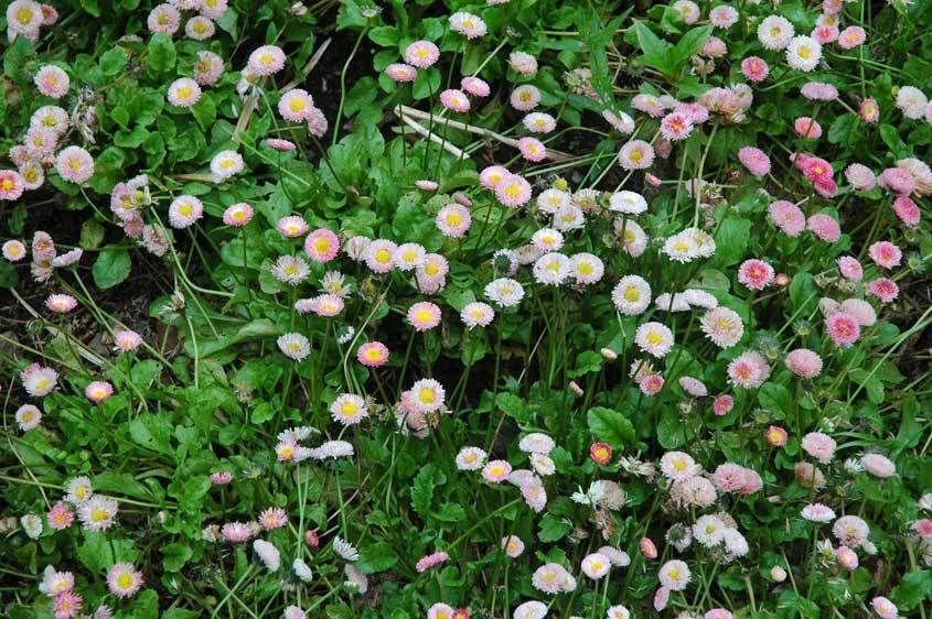 1flowers_2.jpg