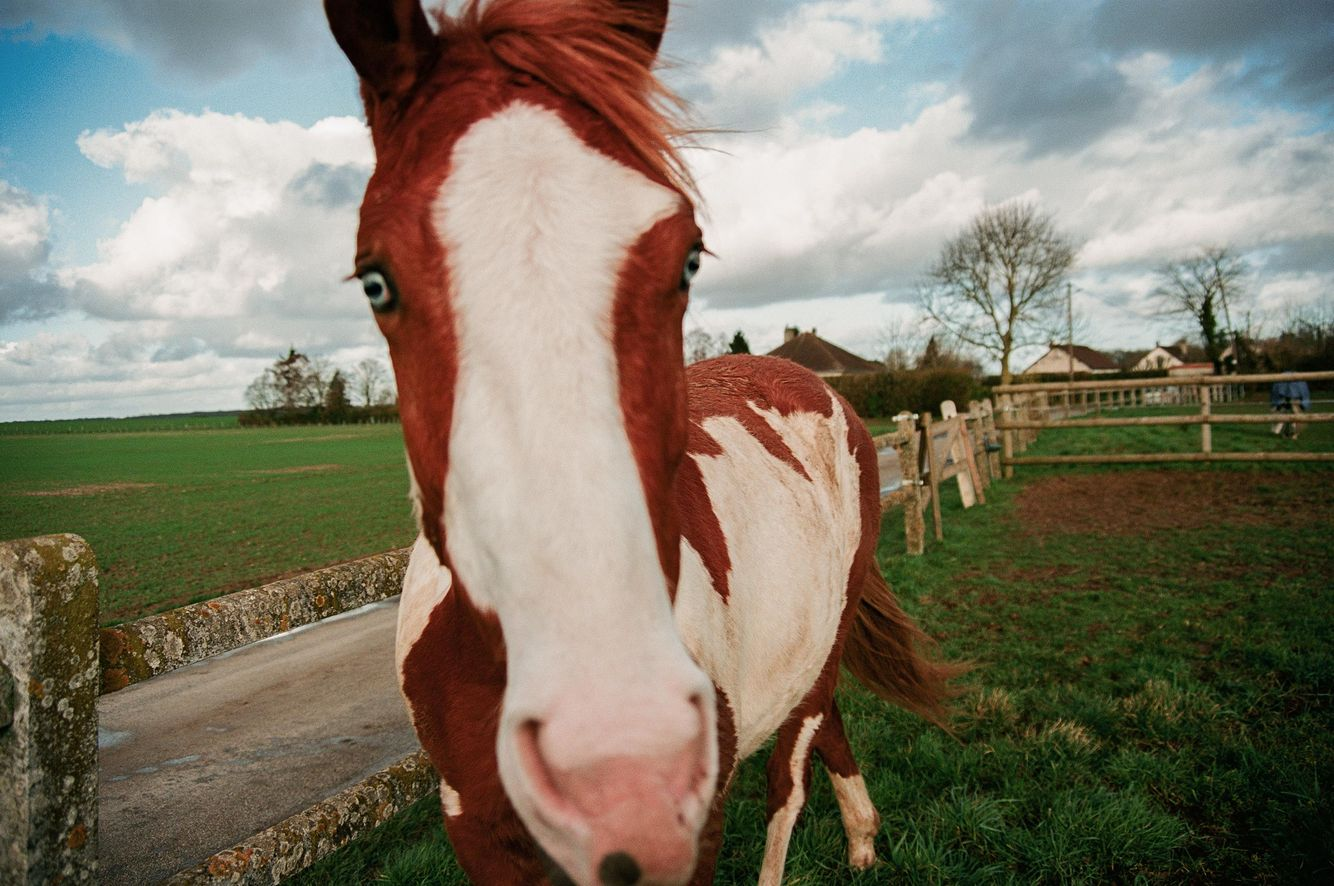 Niv_Shank_horses_french_lifestyle_7.jpg