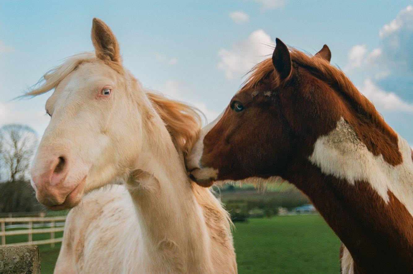 Niv_Shank_horses_french_lifestyle_8.jpg