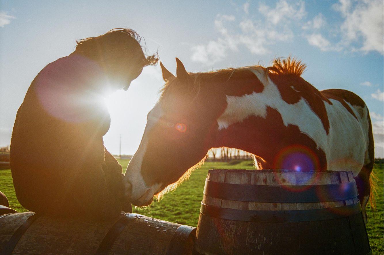 Niv_Shank_horses_french_lifestyle_4.jpg