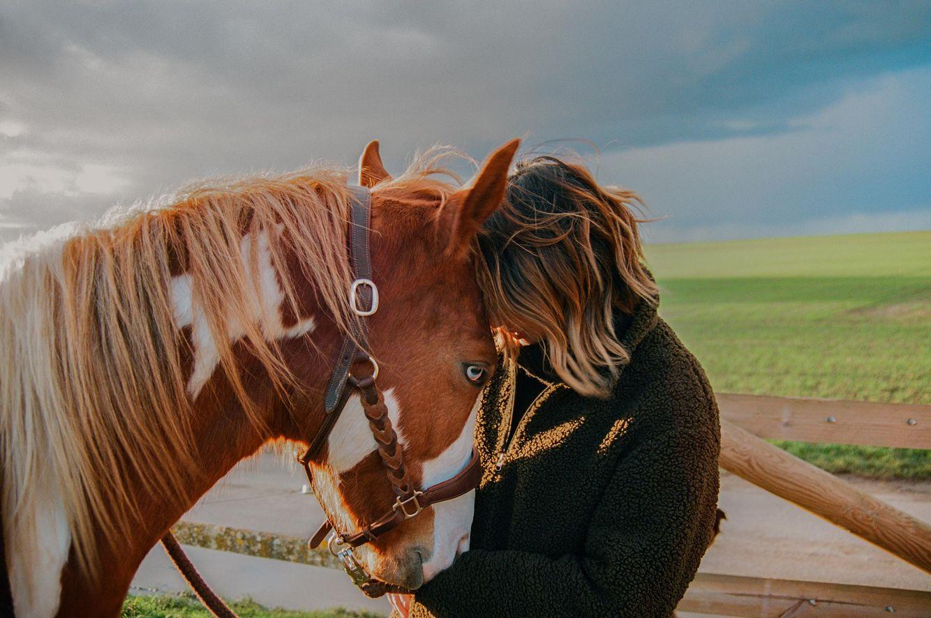 Niv_Shank_horses_french_lifestyle_1.jpg