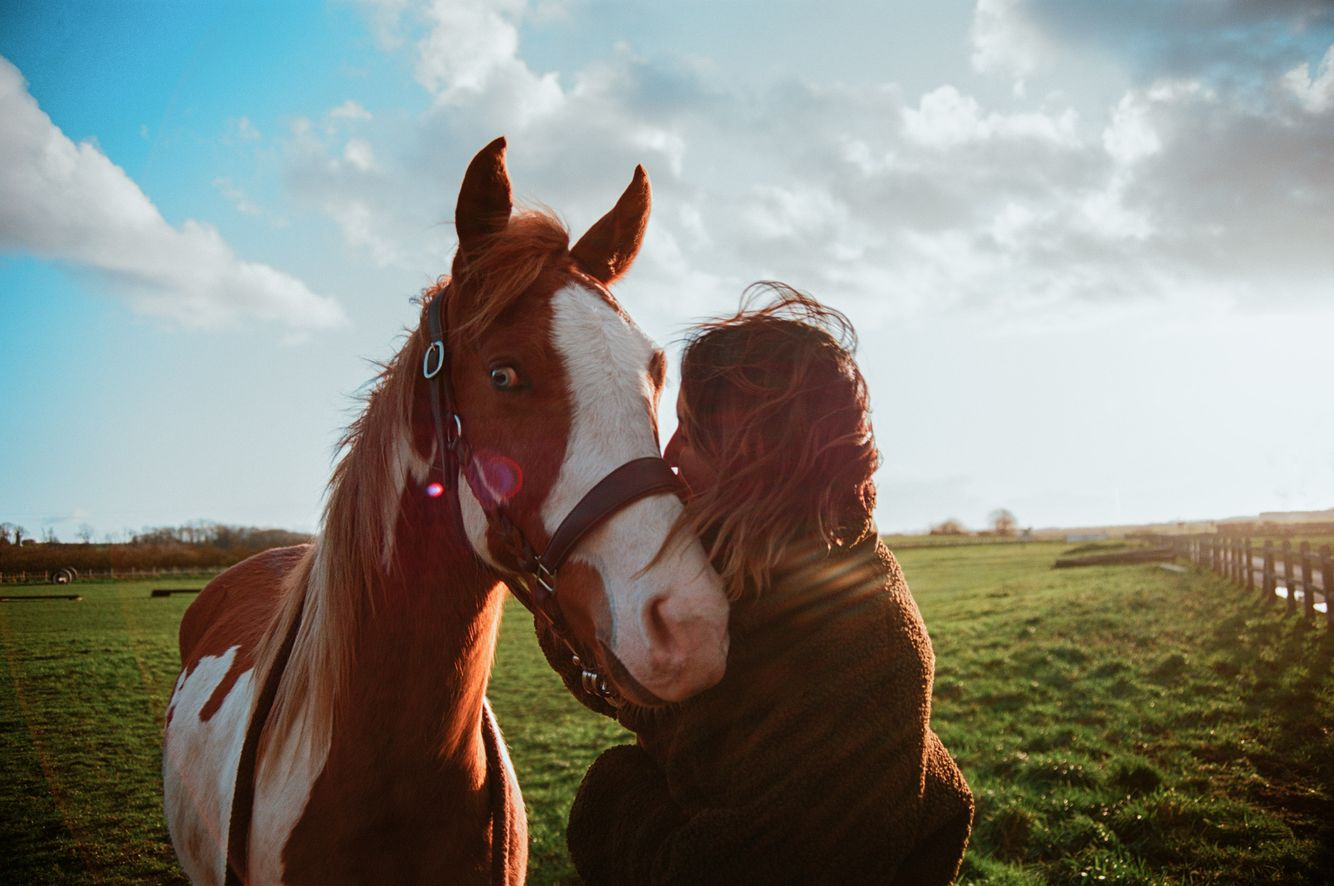 Niv_Shank_horses_french_lifestyle_2.jpg