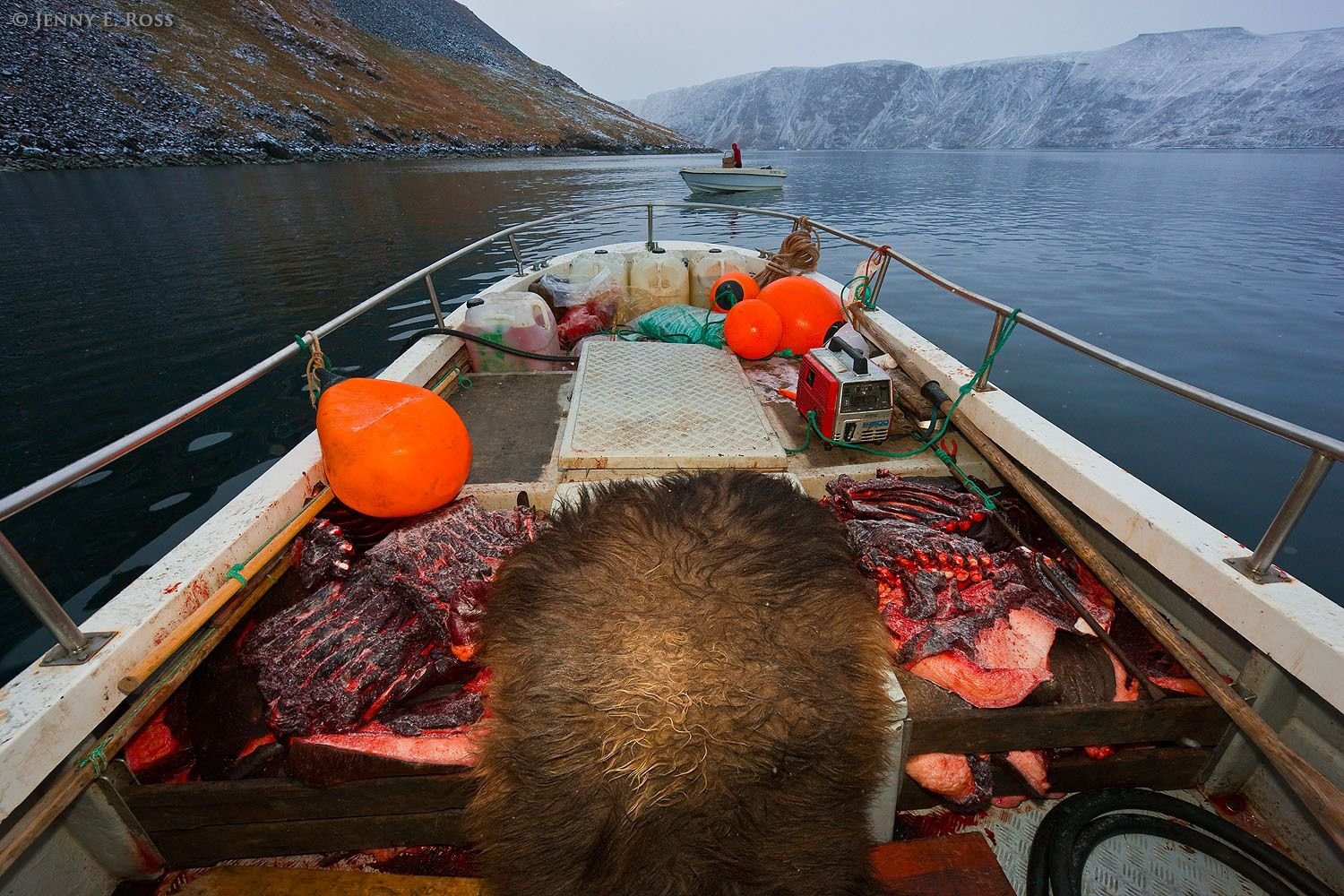 A small boat is filled with walrus and musk ox meat after a subsistence hunt by indigenous Greenlanders in remote Northwest Greenland.