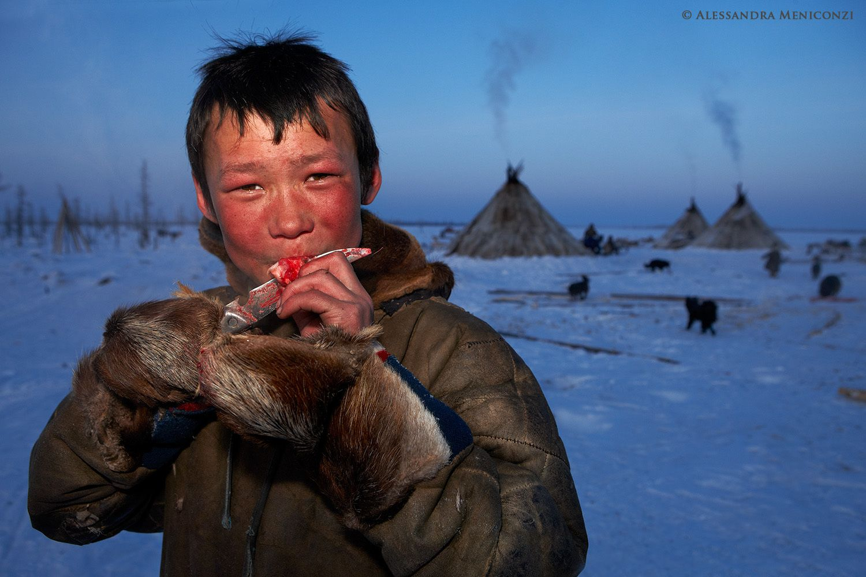 A Nenet boy eats meat from a freshly-killed domestic reindeer.