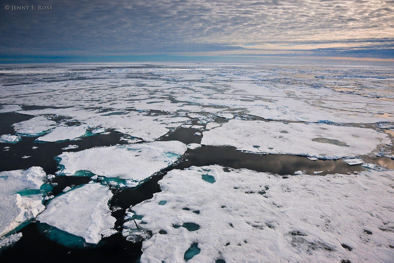 Melting Arctic sea ice in summer